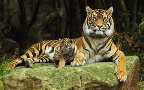 природа, мамка, камень, хищники, кошки, тигренок