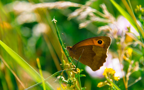 butterfly, beautiful, grass, stunner, green