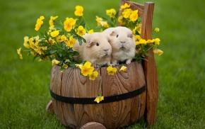 flowers, animals