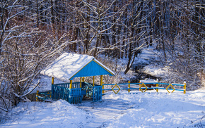 Sun, beautiful, forest, snow, ice