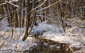 cold, ice, winter, water, forest
