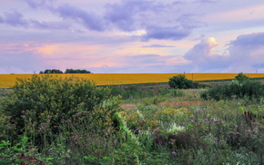 field, shrubs, greenery, nature, sunset