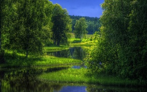 trees, reflection, nature, forest, stunner
