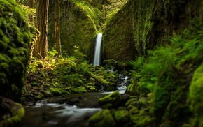 forest, greenery, creek, trees, moss