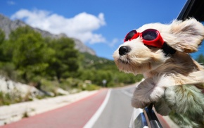 sky, glasses, dog, animals, road