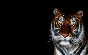 тигр, арт, 3D, фотошоп, темный фон, 3Д