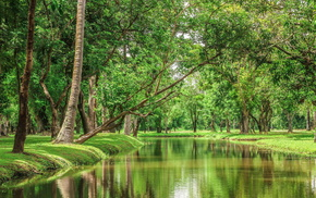 nature, pond, river, trees