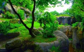 деревья, камни, природа, зеленый фон, красиво