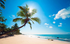 Sun, nature, sky, tropics, summer