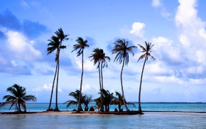nature, rest, sea, palm trees, sand