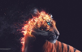 Desktopography, artwork, fire, animals, digital art, tiger