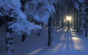 light, winter, snow, twigs, trees, forest, Sun