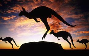 animals, Australia