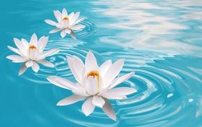CGI, flowers, Lotus, Цветы