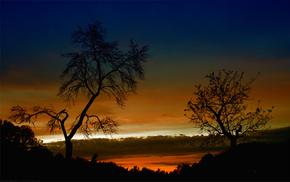 свет, закат, деревья, вечер, природа, солнца