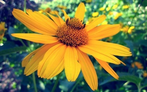nature, Sun, yellow, flower, macro