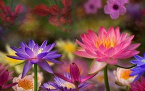 photoshop, nature, flowers