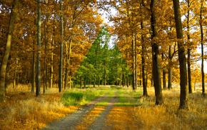 Лето, деревья, минимализм, осень, лес, дорога