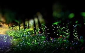 листья, зелень, трава, природа