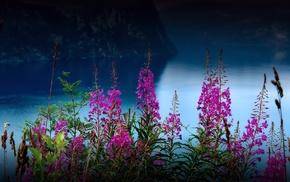 цветы, долина, природа, река