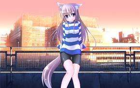 девушки из аниме, оригинальные персонажи, аниме, уши животных