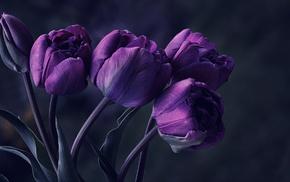 flowers, tulips, macro
