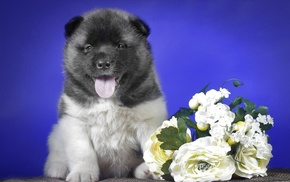 puppy, flowers, animals