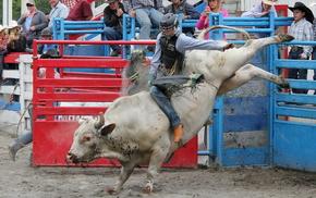 бык, Small town rodeo, спорт