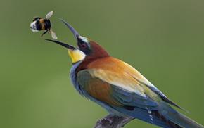 bird, animals