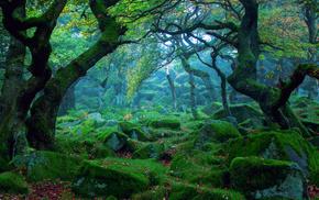 камни, мох, лес, природа, дымка