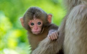 малыш, животные, фон, обезьянка