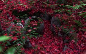Киото, природа, листва, красивые, осень, папоротник