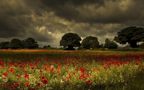 beautiful, poppies, nature, trees, sky