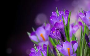 flowers, flower, лепестки, petals, цветы, crocus