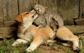 photo, positive, animals, cat, dog