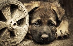 собака, животные