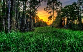 красивые, кипарисы, трава, деревья, закат