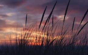 трава, закат, облака, пейзаж