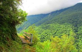 stunner, shadow, beautiful, jungle, clouds