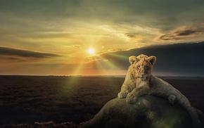 пасмурно, животные, облака, природа, камень, львенок