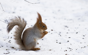 winter, squirrel, snow, muzzle, tail