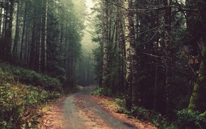 forest, nature, road