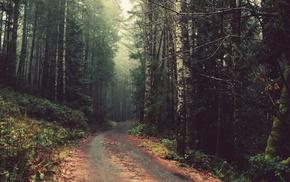 лес, природа, дорога