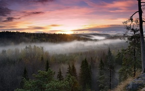 sunset, nature, forest, mist, trees