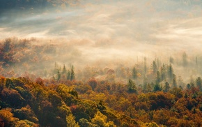 nature, forest, trees, mist