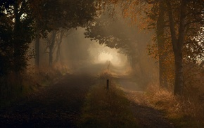 дорога, природа, деревья