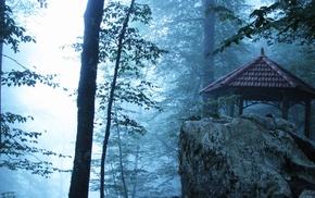 лес, туман, природа
