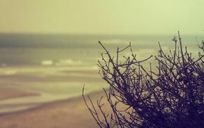 nature, beach