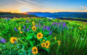 flowers, Ukraine, mountain, light, hills