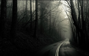 forest, road
